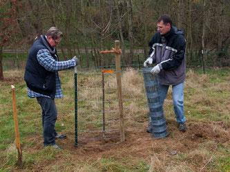Die Zäune werden vor den gefräßigen Ziegen geschützt. - Foto: Kathy Büscher