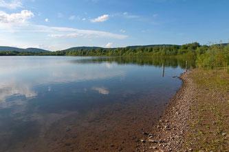 Ausgedehnte Uferbereiche mit Weidenbewuchs. - Foto: Kathy Büscher