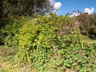 Heckenstruktur im Naturschutzgebiet. - Foto: Kathy Büscher