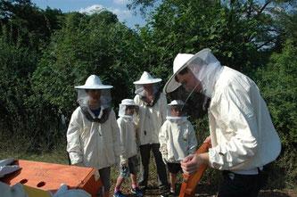 Die Bienenkiste wird geöffnet - dieser Eingriff ist für das Volk weiter weniger störend als es bei der konventionellen Methode der Fall wäre. - Foto: Britta Raabe