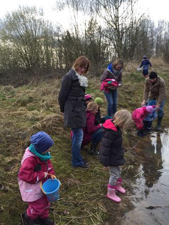 Am Teich werden die Amphibien wieder freogelassen. - Foto: Maren Matzeik