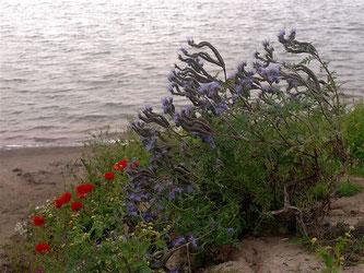 Wildbewuchs am Rand der Auenlandschaft. - Foto: Kathy Büscher