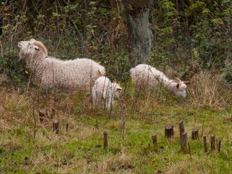 Die drei Neuankömmlinge auf der Streuobstwiese. - Foto: Kathy Büscher