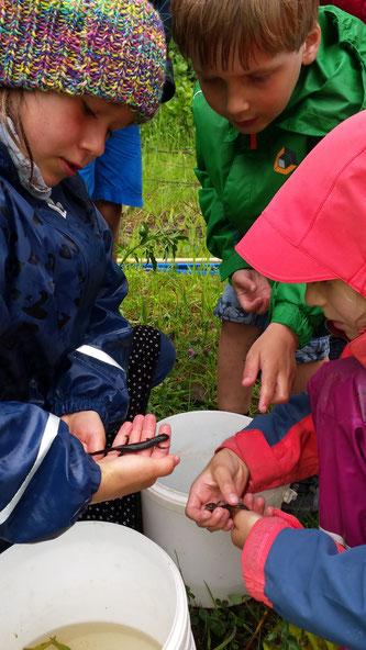 Die Kinder der NAJU entdeckt Amphibien. - Foto: Ilona Jentschke