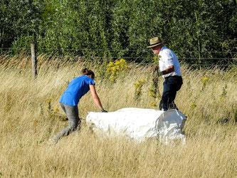 Die Pflanzen werden in große Säcke gepackt. - Foto: Kathy Büscher