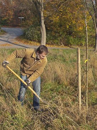 Baumpflanzaktion auf der Streuobstwiese Hohenrode. - Foto: Kathy Büscher
