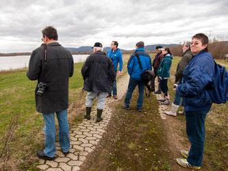 Auf der Weide am Stichweg konnten Graugänse beobachtet werden. - Foto: Kathy Büscher