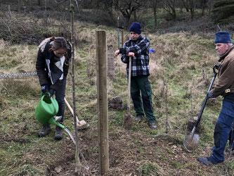 Auch neue Bäume sind gepflanzt worden. - Foto: Dr. Nick Büscher