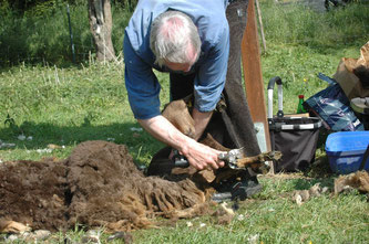 Die Schafe müssen jedes Jahr geschoren werden. - Foto: Britta Raabe