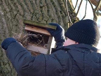 Auch die Halbhöhlen wurden von den alten Nestern befreit. - Foto: Kathy Büscher