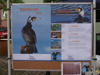 """Der Kormoran – """"Vogel des Jahres"""" 2010 - stand ganz im Fokus des Infostandes. - Foto: Kathy Büscher"""