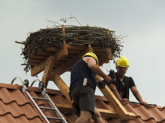 Die Konstruktion wird auf dem Dach festgeschraubt. Nun kann der Weißstorch einziehen. - Foto: Nick Büscher