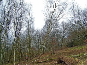 Im Naturschutzgebiet fallen Bäume, um den Magerrasen wieder freizulegen. - Foto: Kathy Büscher