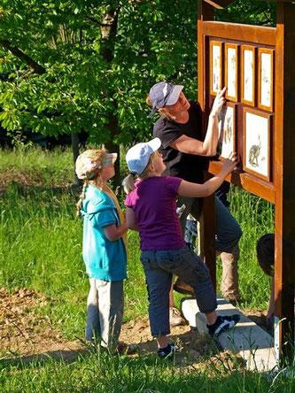 Die neuen Naturlehrtafeln informieren über das Leben auf der Streuobstwiese und bieten auch kleine Ratespiele über Selbiges. - Foto: Kathy Büscher