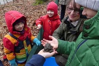"""Jakob (nicht im Bild) und Tim (re.) zeigen Marie (li.) und Ronja ein Erdkrötenpaar. Svenja Niedorf erzählt, dass die Naturschützer """"Doppeldecker"""" dazu sagen. - Foto: Jan Oldehus"""