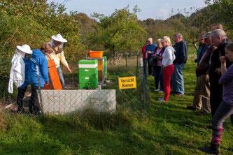 Imker Dennis Dieckmann erklärt den Besuchern die Ökologie der Bienen. - Foto: Kathy Büscher