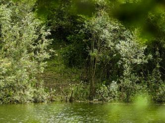 Gut zu erkennen ist die zerstörte Ufervegetation. - Foto: Kathy Büscher