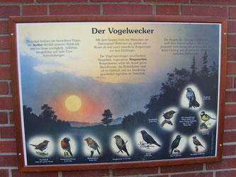Der Vogelwecker veranschaulicht den Kindern die Vogelwelt. - Foto: Kathy Büscher