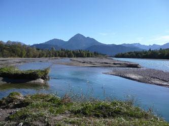 Einblick in die wilde Flusslandschaft. - Foto: NABU