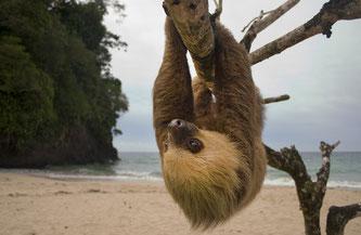 """Costa Ricas artenreiche Tier- und Pflanzenwelt erleben Individualreisende bei der """"Hike & Drive""""-Tour von Hauser Exkursionen. Bildnachweis: Maxim Tarasyugin von Shutterstock.com"""