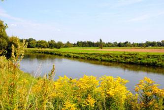 Dübener Heide - Mulde - Foto: Andreas Schmidt