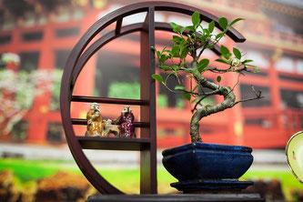 Auch der Bonsai steht für die Zen-Tradition (Symbolbild; Foto: pixabay.com / delo)