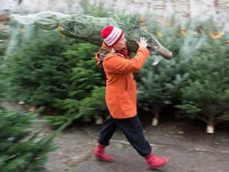 Der Bundesverband der Weihnachtsbaumerzeuger rechnet für 2016 mit unveränderter Nachfrage nach etwa 24 bis 25 Millionen Christbäumen. Foto: Sebastian Kahnert