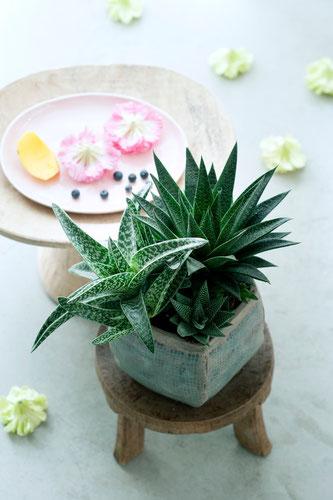 Grünes Interieur mit Aloe (Foto: obs / Blumenbüro)