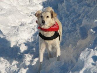 In der Winterzeit brauchen Hundepfoten besondere Pflege / © PETA