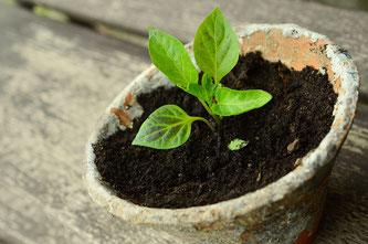 Auch Setzlinge können wieder erworben werden (Symbolbild; Foto: pixabay.com / congerdesign)