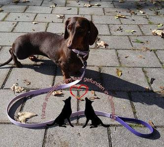 Hund entlaufen/vermisst  in Österreich