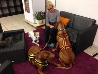 Junghundekurs, Hundetraining, Hundeschule, Butzbach, World of Dogs