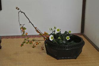 蔓梅擬とスブレー菊