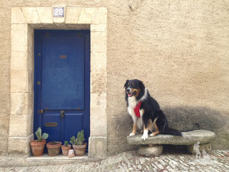 Fotoshooting beim Spaziergang in Bonnieux.