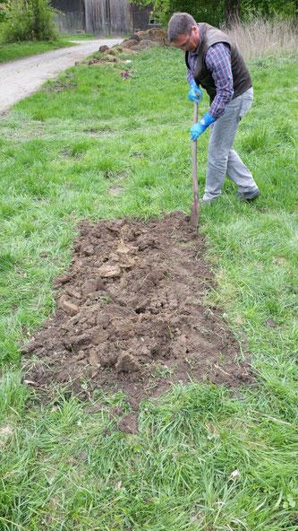 Ein Mann gräbt auf einer Grasfläche mit einem Spaten um.