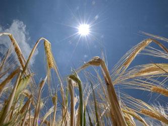 Getreidebauern sind froh über die heißen Temperaturen. Foto: Patrick Seeger/Archiv