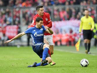 Robert Lewandowski und die Bayern mussten sich gegen Schalke mit einem 1:1 begnügen. Foto: Tobias Hase