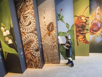 Ein Mädchen schaut sich einen Teil der Ausstellung «Naturdetektive» an. Foto: Christoph Schmidt