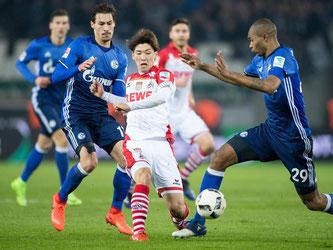 Kölns Yuya Osako (M) kämpft mit Schalkes Benjamin Stambouli (l) und Naldo kämpfen um den Ball. Foto: Marius Becker