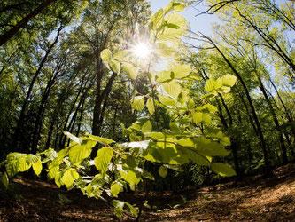 Weniger als hundert verschiedene Baumarten wachsen hierzulande. Das ist wenig im Vergleich zu der Baumvielfalt, die es auf der Welt gibt. Foto: Julian Stratenschulte/Archiv