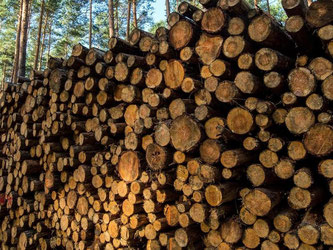 Die deutsche Holzindustrie erwartet nur ein Mini-Wachstum. Foto: Patrick Pleul/Archiv