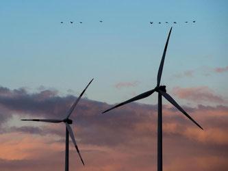 Der von Windkrafträdern erzeugte Infraschall soll ungefährlich sein. Foto: Patrick Pleul