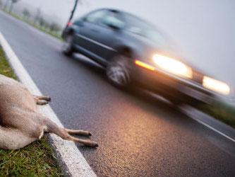 Ein tödlich verunglücktes Tier sollte nur unter der Verwendung von Schutzhandschuhen an den Fahrbahnrand gebracht werden. Foto: Julian Stratenschulte