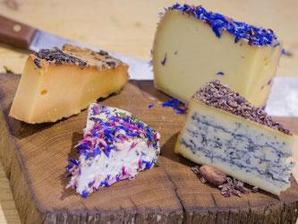 Rechts unten ein Blauschimmelkäse mit Lakritz und Kakaobohnen, links daneben ein bunter Schafscamembert mit Rosenblättern, links oben ein Käse eingelegt in Spätburgundertrester und rechts oben der Käse mit Apfelwein und Blüten. Foto: Christoph Schmidt/dpa