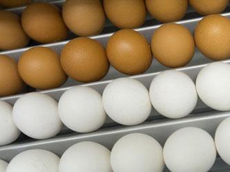 Zu Ostern steigt die Nachfrage nach weißen Eiern. Diese eignen sich besser zum Färben. Foto: Peter Endig/dpa