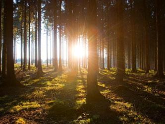 Auf dem Weg durch sonnendurchflutete Wälder sollen gestresste Menschen im Sauerland herunterkommen. Foto: Sauerland Tourismus e.V./Oliver Franke