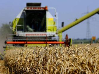 Lediglich vier Großkonzerne kontrollieren rund 70 Prozent des Welthandels mit Agrarrohstoffen. Foto: Daniel Karmann