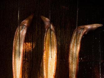 Räucheraal schmeckt zwar lecker - sollte aber nach Ansicht von Umweltschützern nicht auf dem Speiseplan stehen. Nach Angaben des WWF ist der Aal sogar vom Aussterben bedroht. Foto: Franziska Gabbert