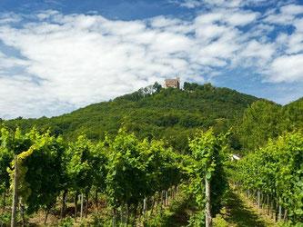 Spritztour durch die Weinberge: Die Route von Schweigen-Rechtenbach nach Bockenheim, vorbei am Hambacher Schloss, ist das Original unter den Deutschen Weinstraßen. Foto: Rheinland-Pfalz Tourismus/Dominik Ketz