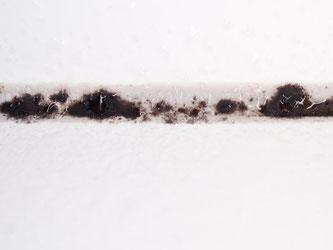 In Fugen setzen sich Schimmelpilze besonders gerne fest und bilden ihre schwarzen Geflechte. Foto: Franziska Gabbert